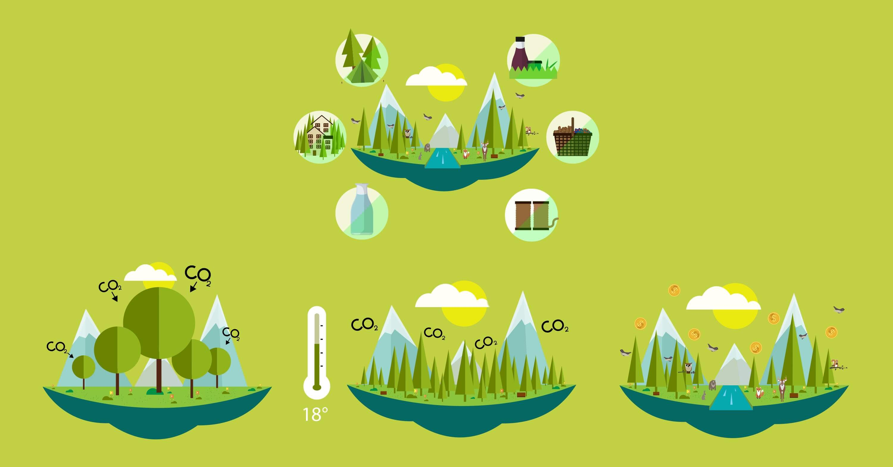 UNECE forest video FAO illustration animated motion graphic